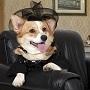 Эксперты предложили правовые конструкции владельцам домашних животных для обеспечения надлежащего ухода за ними после своей смерти