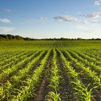 Риски банкротства для сельскохозяйственных кредитных потребительских кооперативов могут минимизировать