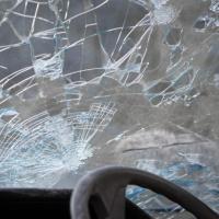 ДТП с гибелью животного и помятым авто: кто кому должен?