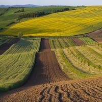 Финансисты разъяснили: конкретные ставки по земельному налогу могут быть установлены местными властями