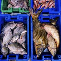 Всех рыбопромышленников могут перевести на льготное налогообложение