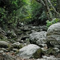 Упростится порядок предоставления лесных участков в безвозмездное пользование (с 1 июня)