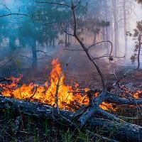 Определены основы госполитики в области пожарной безопасности на период до 2030 года