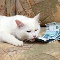 За долги хозяев могут запретить изымать любых животных, используемых для целей, не связанных с предпринимательской деятельностью
