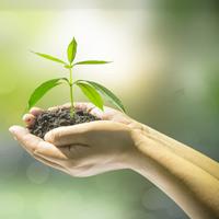 На проведение Года экологии будет израсходовано почти 165 млрд руб. из средств частных инвесторов