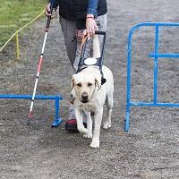 Сроки использования предоставляемых инвалидам технических средств реабилитации могут скорректировать