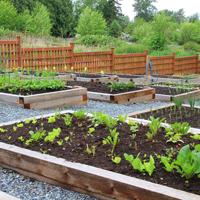 В Госдуме обсудили реформу садоводческих товариществ