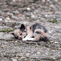 За уничтожение животных общеопасным способом могут установить уголовную ответственность