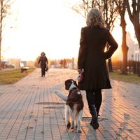 За выгул собак без поводка и намордника на отдельных территориях могут начать штрафовать