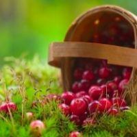 Применять НПД можно в отношении реализации собранных грибов, орехов и ягод