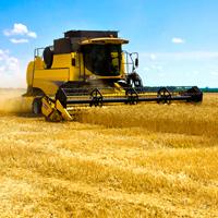 Правительство РФ проработает меры по повышению оперативности предоставления субсидий сельхозтоваропроизводителям