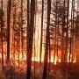 Если вы оказались в зоне природного пожара