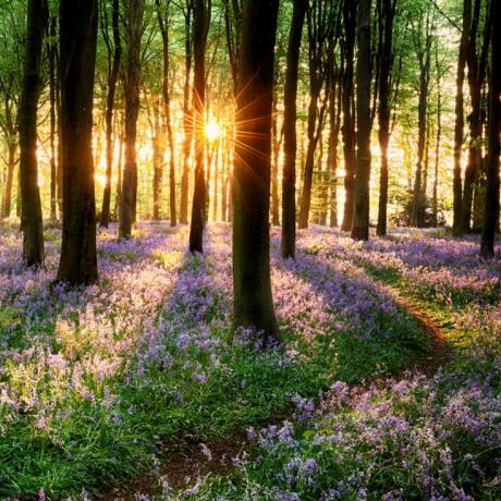 В России может быть возрожден институт лесной охраны
