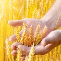 Планируется создать информационную систему для сельхозпроизводителей