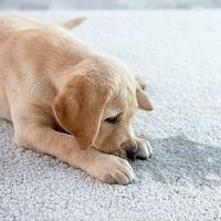 Наказание за жестокое обращение с животными могут ужесточить