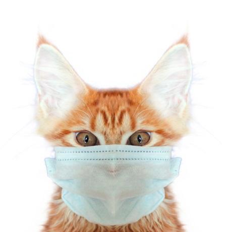 Вакцина против COVID-19 для животных: результаты исследований и перспективы массового применения