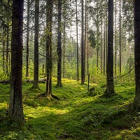 Сегодня вступил в силу закон о лесной амнистии