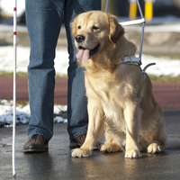В России впервые проведут перепись слепоглухих