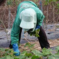 Дачников могут обязать предоставлять необходимую информацию для ведения похозяйственных книг