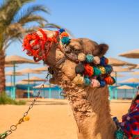 Отменен запрет на чартерные рейсы в Египет