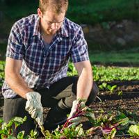 Регионы России получат субсидии на развитие фермерских хозяйств