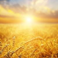 Переработчики сельхозпродукции получат господдержку