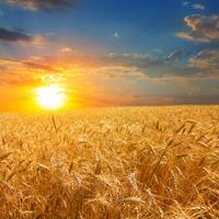 Утверждена Стратегия развития сельских территорий до 2030 года