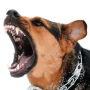 Начнут применяться ограничения на свободный выгул потенциально опасных собак (с 1 января)