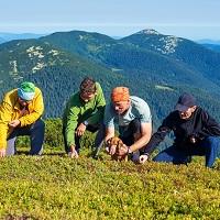 Реализация физлицами грибов, ягод, орехов и других некоторых лесных ресурсов не облагается НДФЛ