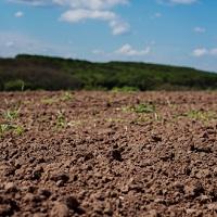 Установлена льготная ставка аренды государственных земель сельхозназначения