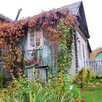 Общественники раскритиковали правительственный законопроект о садоводстве, огородничестве и дачном хозяйстве