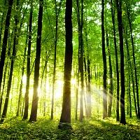 Утверждены формы чек-листов для проведения федерального государственного пожарного надзора в лесах