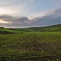 Границы земельных участков могут начать согласовывать с муниципалитетами