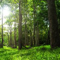 Может быть усилена уголовная ответственность за незаконную рубку лесов, находящихся на особо охраняемых природных территориях