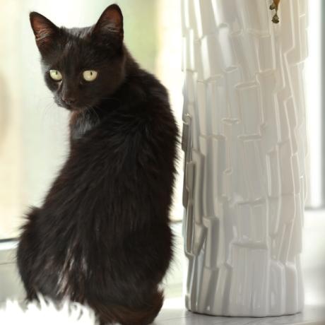 Предлагается чипировать всех домашних животных