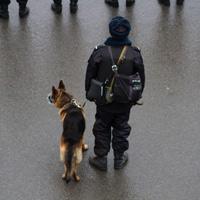 Сотрудников полиции могут наделить правом в отдельных случаях осуществлять вскрытие транспортного средства