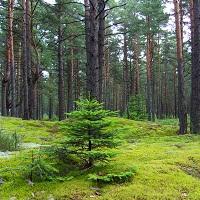 Все лесопарки станут преобразовывать в лесничества (с 1 июля)