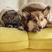 Использование домашних животных в коммерческих целях предлагается ограничить