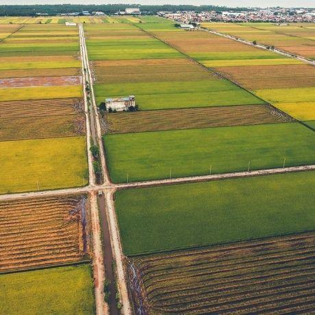 ФНС России разъяснила особенности представления сведений о земельных участках, изъятых или ограниченных в обороте