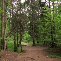 Минприроды России предлагает обязать компании высаживать компенсационные леса при потерях лесного фонда в результате их деятельности