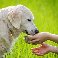 Суд разрешил подкармливать бродячих собак