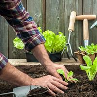 Минэкономразвития России подготовило новую редакцию проекта закона для садоводов и огородников