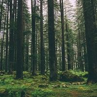 Предлагается ужесточить ответственность за сокрытие сведений о состоянии лесов