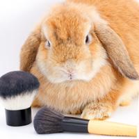 Испытание российской косметики на животных может быть запрещено