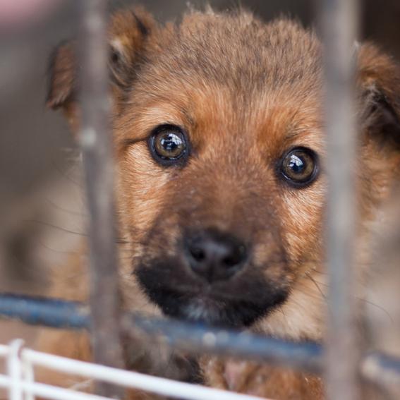 Предлагается установить административную ответственность за жестокое обращение с животными