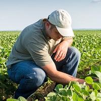 Изменятся правила компенсации ущерба сельскохозяйственным товаропроизводителям от природных ЧС (с 1 декабря)