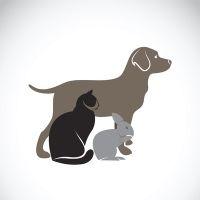 С 30 апреля нельзя обращать взыскание на домашних животных