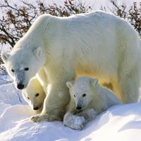 Минприроды России предложило ввести уголовную ответственность за покупку дериватов охраняемых животных