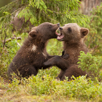 Минприроды России разработало план мероприятий по сохранению редких видов животных и растений