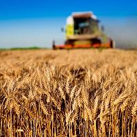 Утверждена Федеральная научно-техническая программа развития сельского хозяйства на 2017–2025 годы